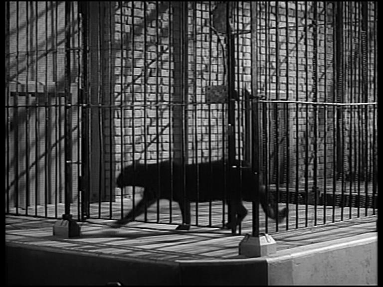 la-feline-photgramme-12