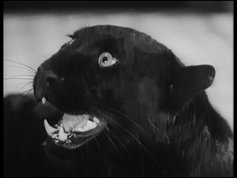 la-feline-photgramme-9